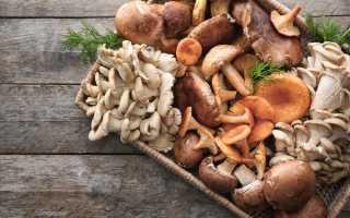 Какие грибы самые полезные?