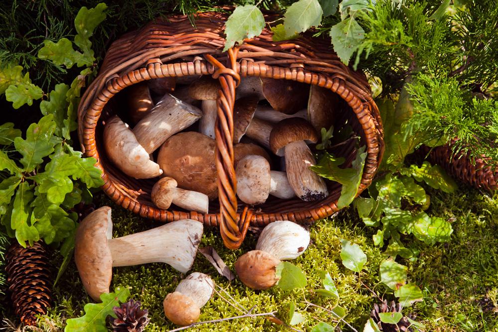 грибы высыпались из лукошка